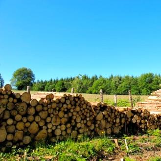 Tas de bois à Savault